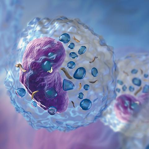 Pyrogen Detection Using Human Monocytic Cells - Solvias News
